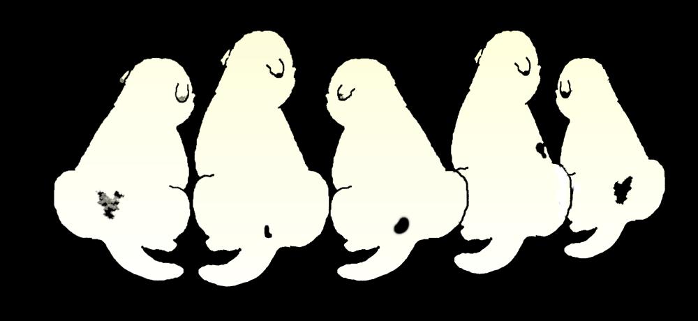 5pyrenees
