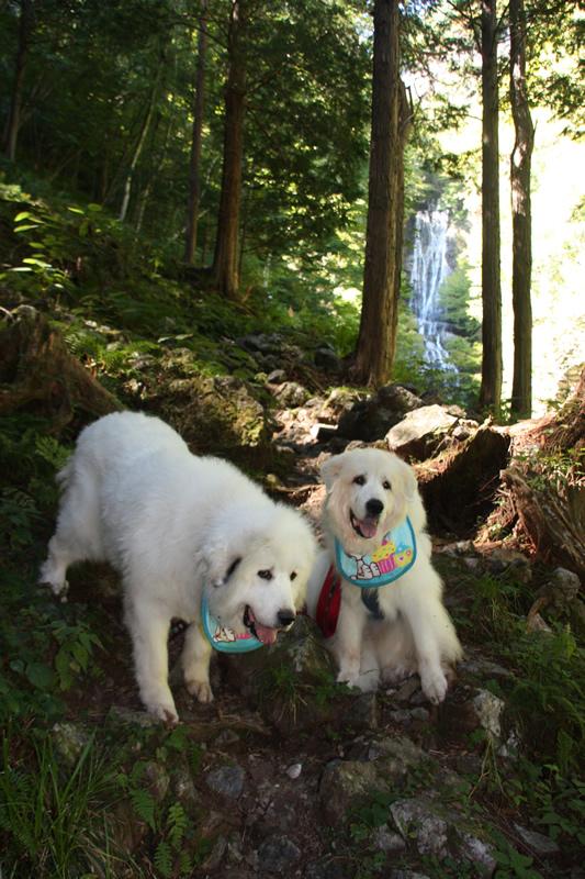 http://yetigobi.pyrenees.jp/images/13-9-30-8.jpg