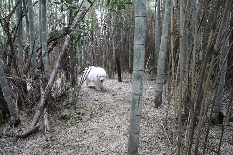 http://yetigobi.pyrenees.jp/images/17-03-18-4.jpg